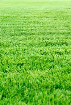 新鮮な緑の草の背景テクスチャ