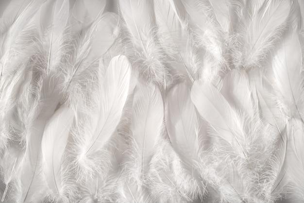 白い羽の背景