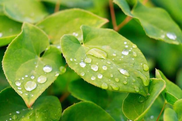 マクロの表示、緑の葉に露します。