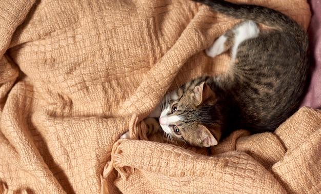 Кошка сидит в одеяле на кровати и готова играть