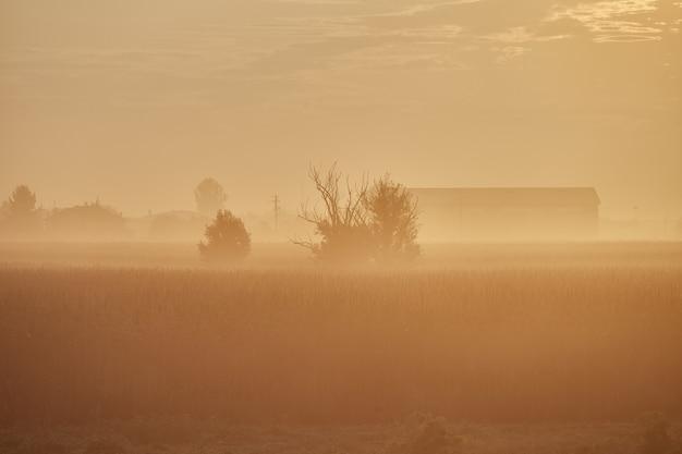 フィールドに暖かい黄色の霧