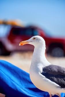 砂浜の海岸にカモメ立って