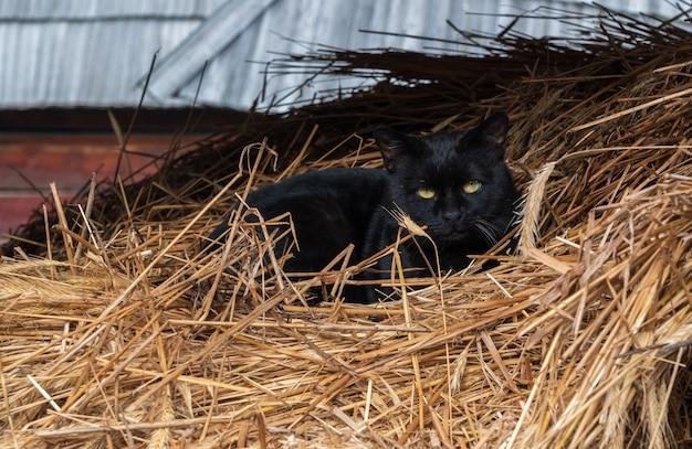 干し草の上に横たわる黒い猫