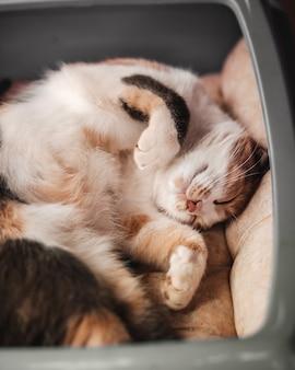 Милый кот спит в своей мягкой и уютной кровати. пушистое животное