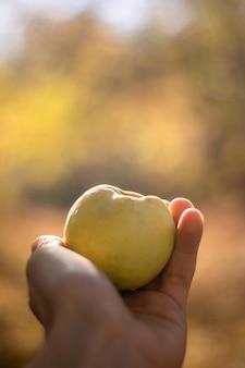 リンゴを自然に与える