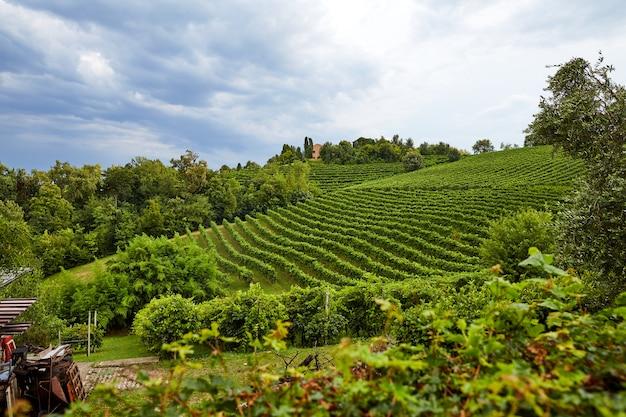 Виноградник в городе конельяно