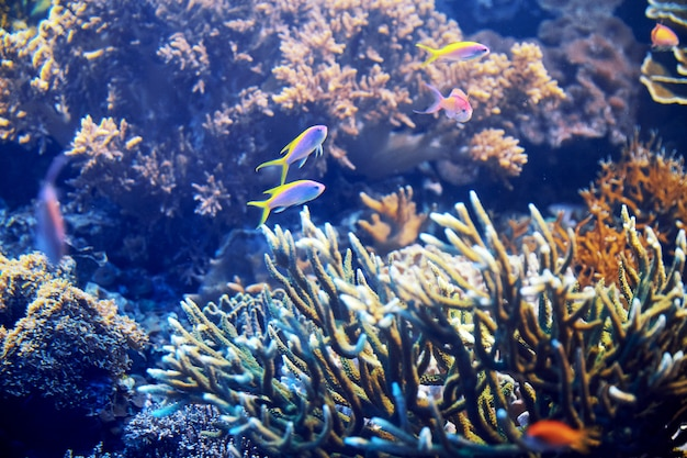 石とカラフルな魚