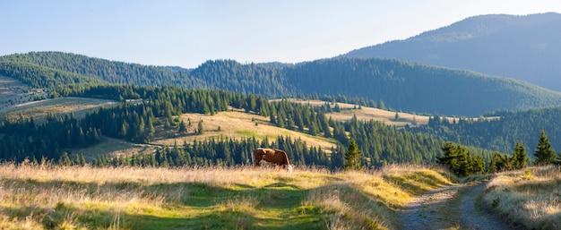 新鮮な緑の山の牧草地で牛の放牧とカルパティア山脈の夏の風景