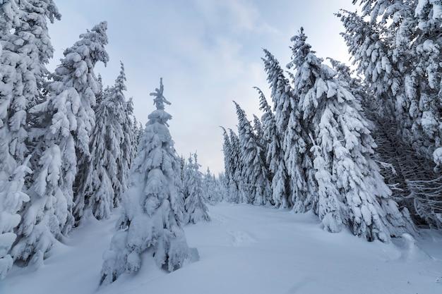 美しい冬の森の風景。