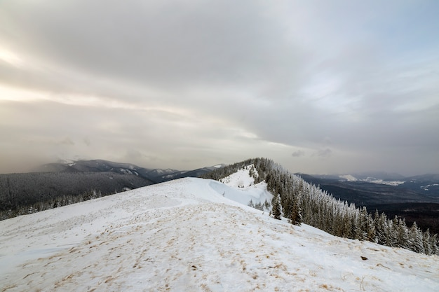Зимний горный пейзаж, снежные вершины и ели под облачным небом в холодный зимний день.