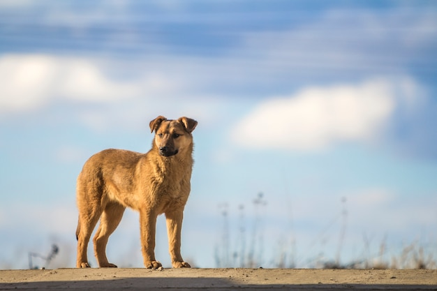 青い空を背景にかわいい黄色い犬立って