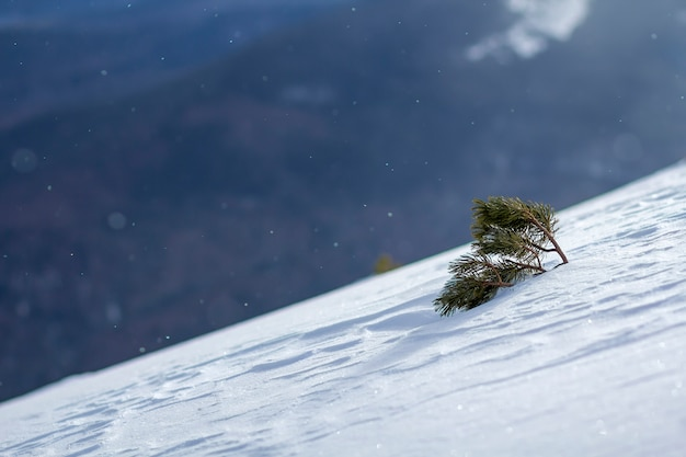 冬の山の丘に覆われた雪の上の小さな松の木