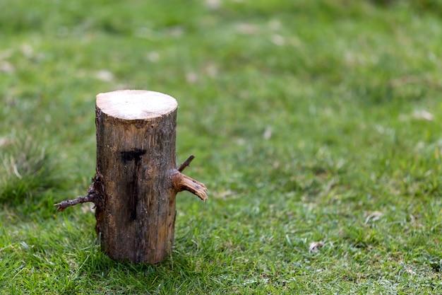 クローズアップショット、草が茂った日当たりの良い夏の森の屋外で木の切り株を分離