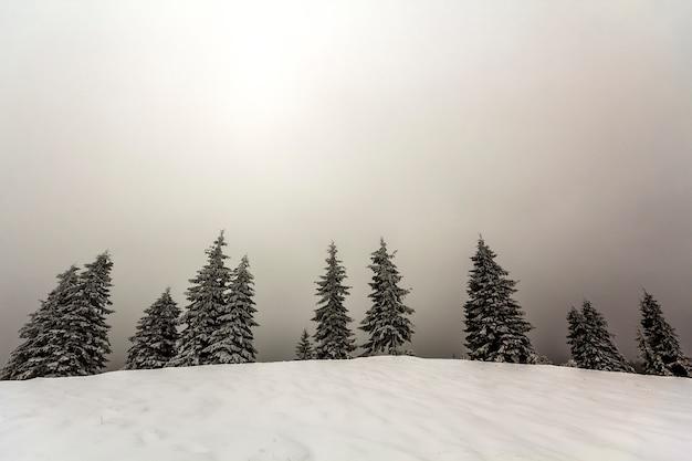 雪に覆われた松の木と冬の霧の風景