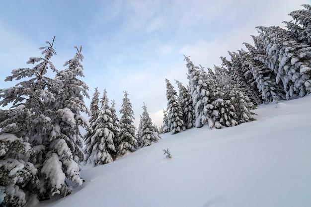 美しい冬の山の風景。背の高い濃い緑のトウヒの木は、山頂と曇り空に雪で覆われています。