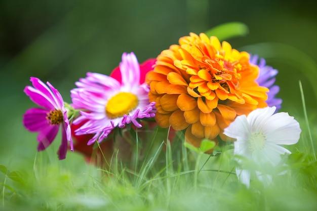 美しい秋の明るい色とりどりの野の花のクローズアップ