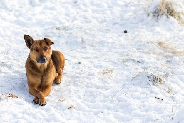 Крупный план желтого пса на белом снегу на открытом воздухе