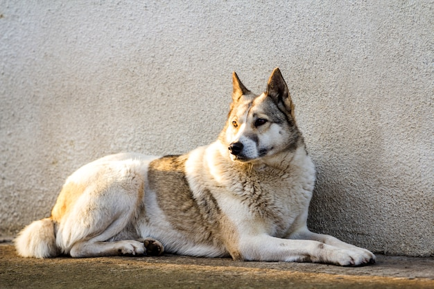 Белая собака сидит возле стены старого дома