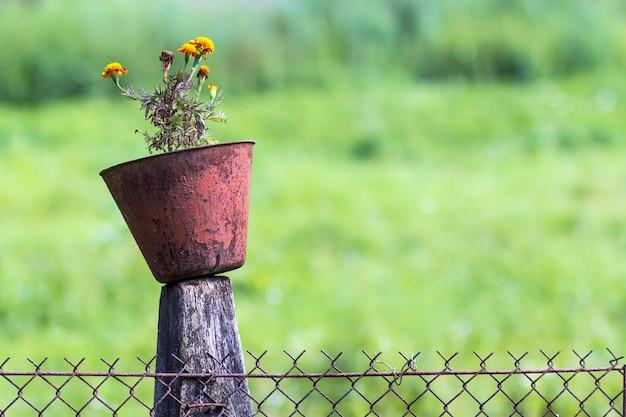 切り株に花を持つ古い鍋