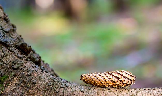 カラフルな背景をぼかした写真の松の木の円錐形のクローズアップ
