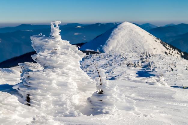 冬の山で曲がった小さな松の木が雪に覆われています