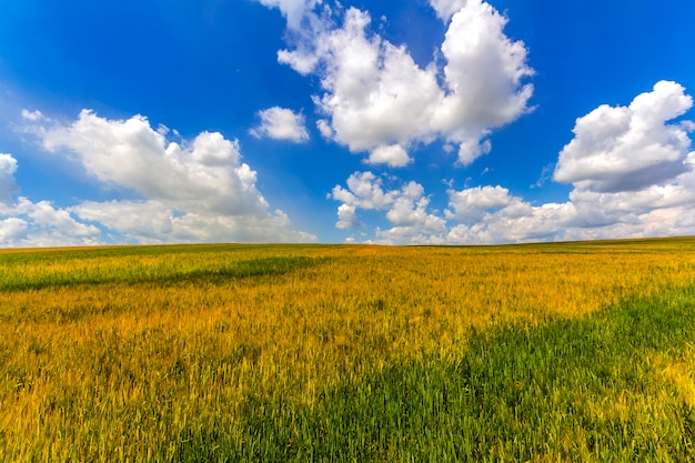 収穫と農業の農業コンセプト