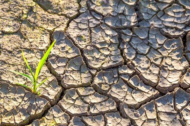 Растение в сухой потрескавшейся грязи.
