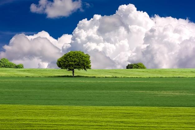Зеленое поле и дерево с голубым небом и облаками