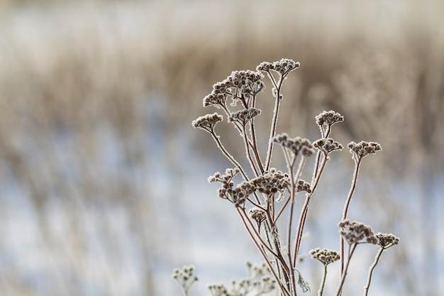 冬に早朝の冷凍植物をクローズアップ