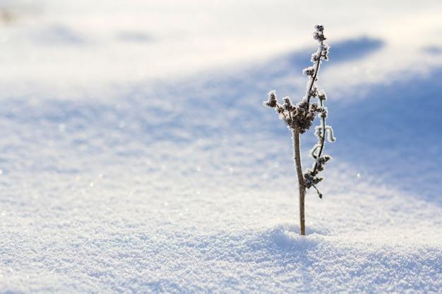 霜で覆われた乾燥した野生の花の植物の美しい抽象的なコントラスト画像