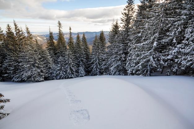 クリスマスの冬の風景。山の斜面に雪と霜で覆われた美しい背の高いモミの木