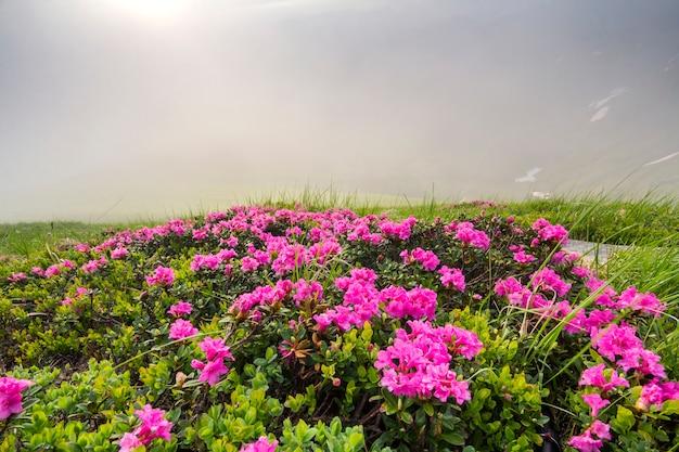 草が茂った山の牧草地にしみなく咲く太陽に照らされて