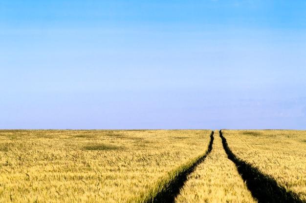 夏の麦畑風景の未舗装の道路のパス