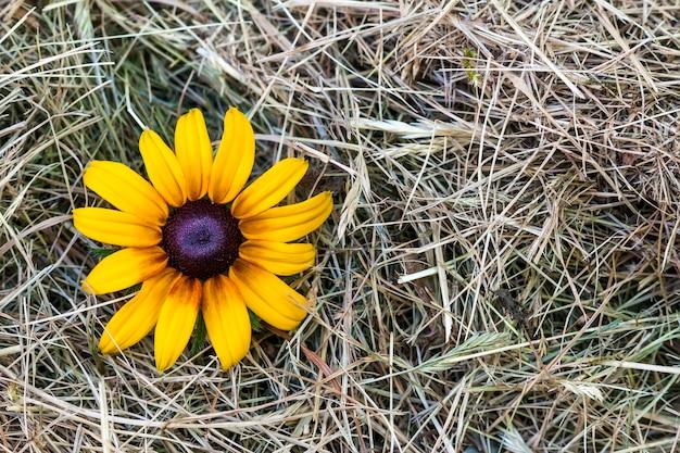 黄色の花と黄色のわら干し草