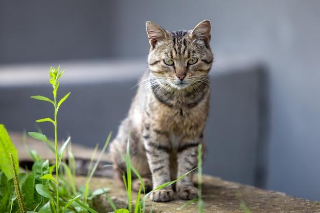 暖かい夏の天気を楽しんでいる大きな飼い猫。
