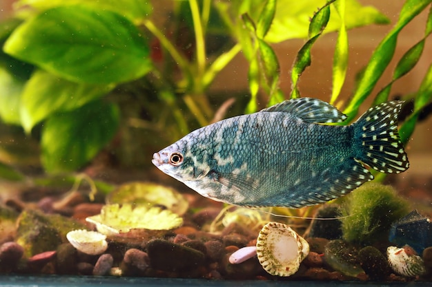 水族館の魚は水で泳いでいます