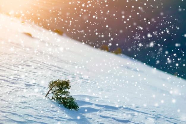 冬の山の雪に覆われた丘の上の小さな松の木