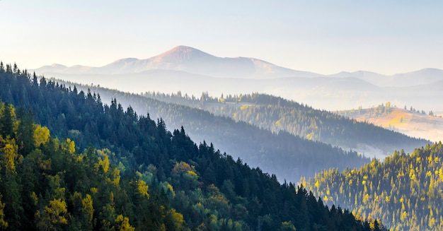 山の素晴らしいソフトサンライズパノラマ。松の木のてっぺんにある秋のセルパチア山頂と丘