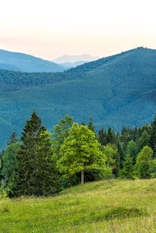 Вертикальное изображение красивого зеленого леса и голубых гор. карпаты вечером