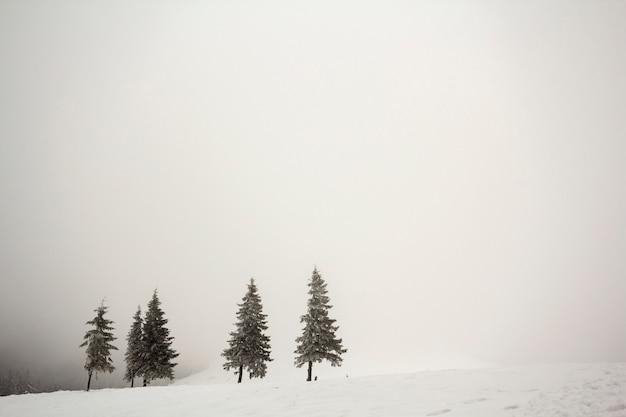 黒と白の冬の山。深い澄んだ雪の霜で覆われた暗いモミの木の行