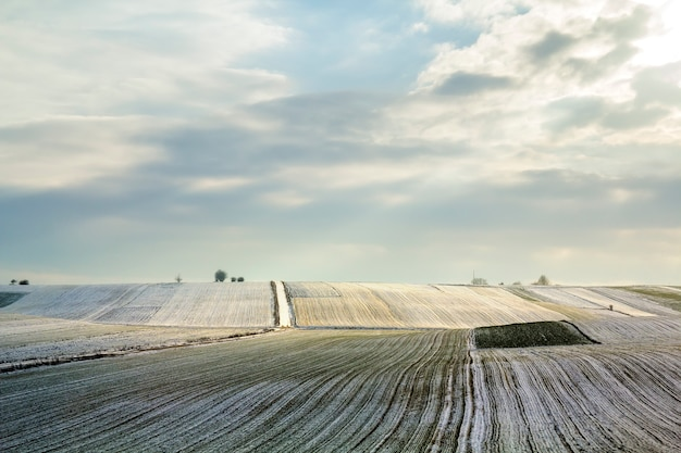 冬の緑のフィールドの日の出。