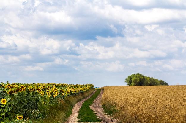 春の初めに牧草地の間の未舗装の道路のある風景。