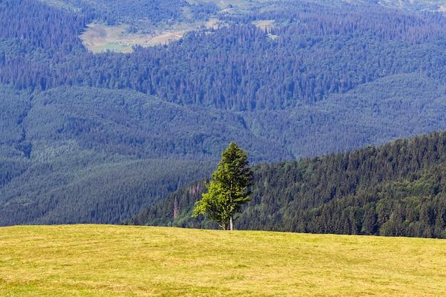 地平線、高山の風景の山の中の単一の松の木。