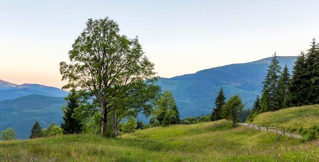 Панорама гор на закате с большим деревом, стоящим впереди