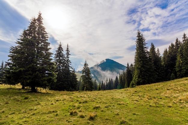 緑の松の森と草の牧草地と山の上の雲