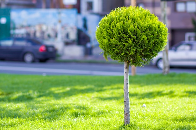 Зеленый газон с яркой травой в городском парке с декоративными деревьями в солнечный летний день.