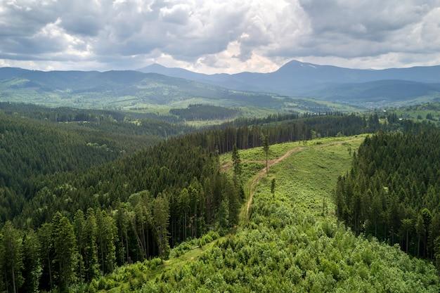 夏の晴れた日に常緑のトウヒの松林で覆われた緑のカルパティア山脈の空撮。