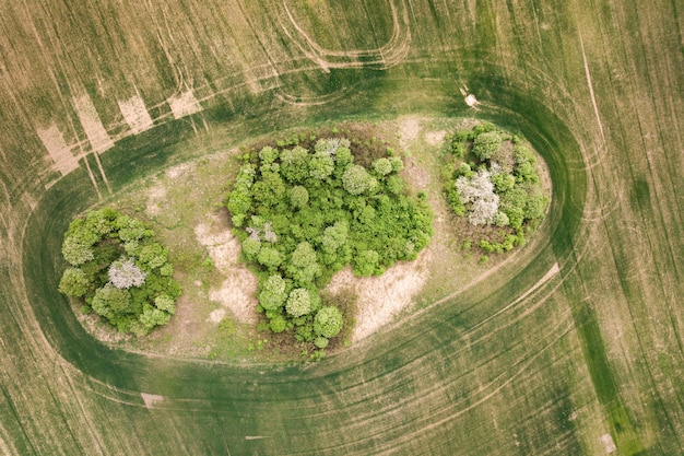 真ん中の木の天蓋と緑の野原のトップダウン空撮。