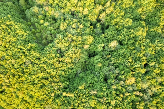 Взгляд сверху зеленого леса на солнечная весна или летний день. дрон фотография, аннотация.