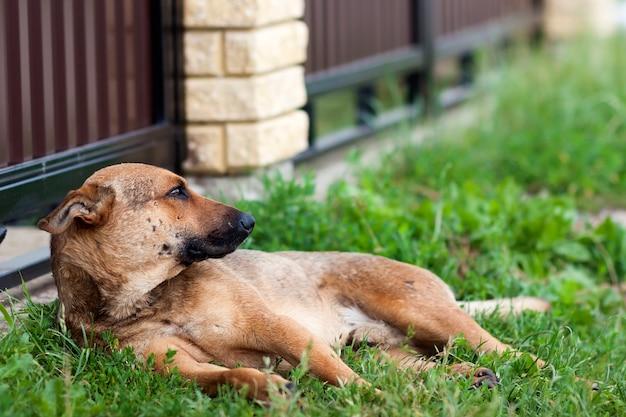 Собака отдыхает на траве летом